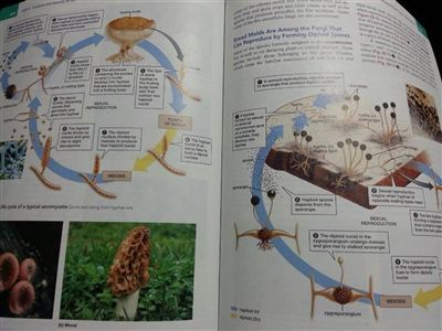 Biology Life on Earth ( Tenth Edition )