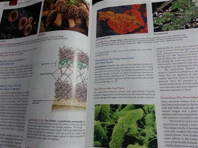 Biology Life on Earth ( Ninth Edition)